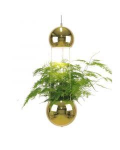 Planter Mässing Pendel från Globen Lighting